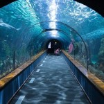 wpid-shark-tunnel-473012_640.jpg